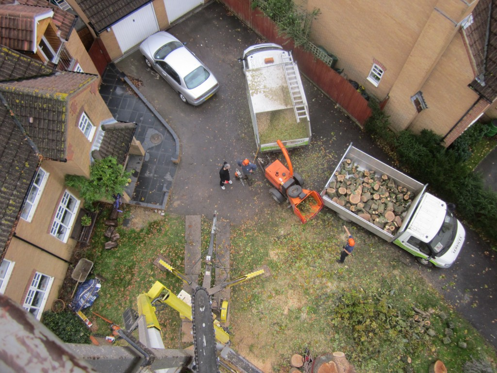 Tree Surgeons Hampshire, West Sussex & Surrey